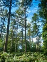 chirk-castle-woods-6