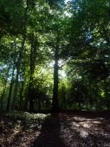 erddig-country-park-5