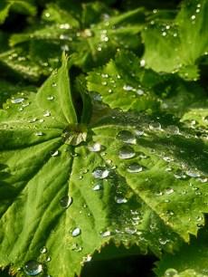 water-drops-chirk-garden-1