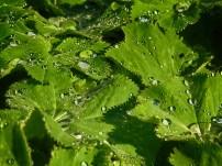 water-drops-chirk-garden-2