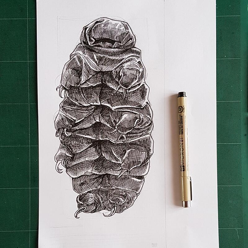 illustration tardigrade dessin crosshatching