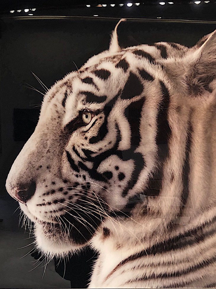 Design and Style Report, image National Geographic, Joel Sartore