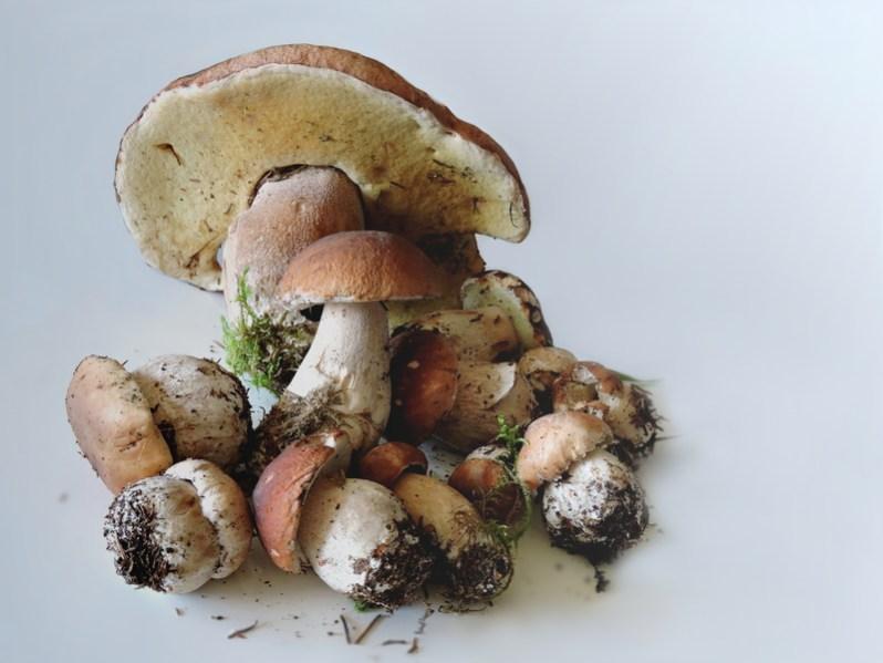 porcini-mushrooms-food-mushrooms-mushrooms-autumn-mushroom-fungus-1448463-pxhere.com.jpg