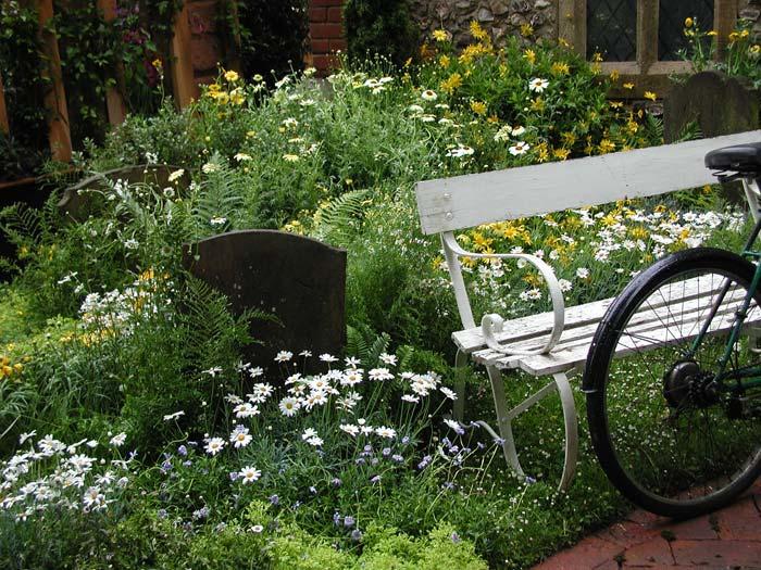 daisy-garden.jpg