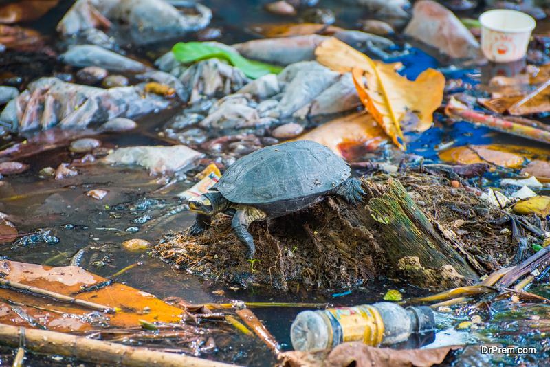 ocean plastic pollution crisis