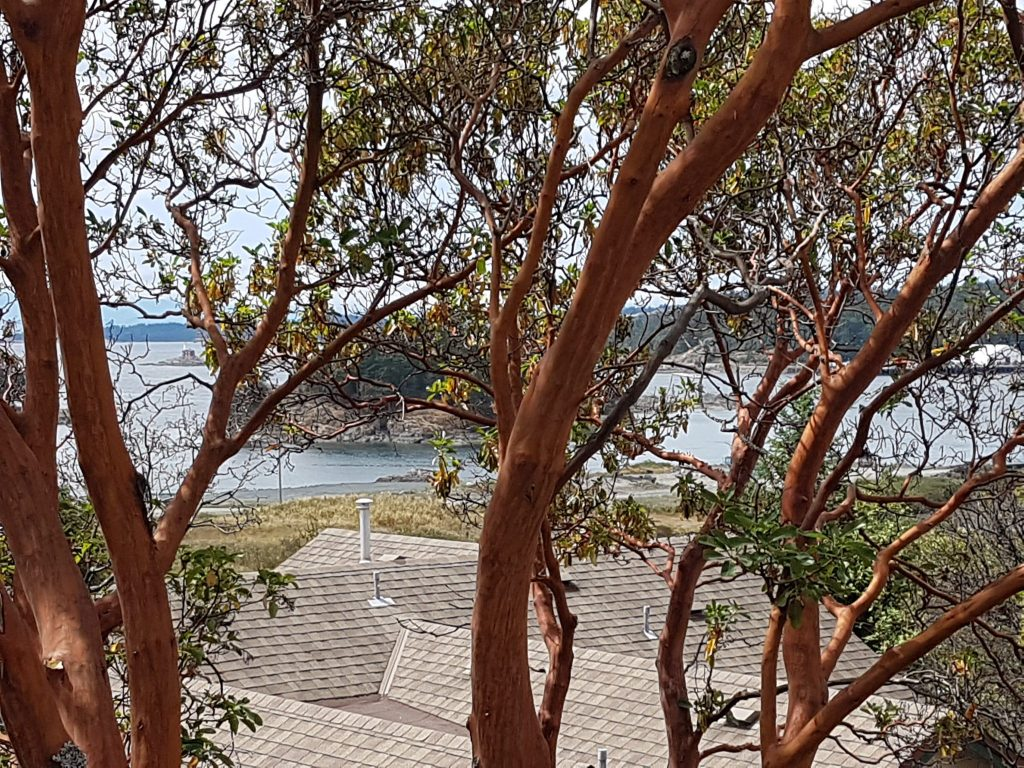 arbutus trees, townhouse views, sea views