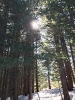 Sun shining behind trees