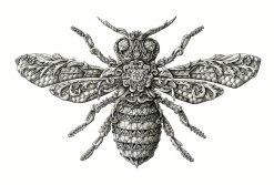 alex-konahin-ink-illustrations-17
