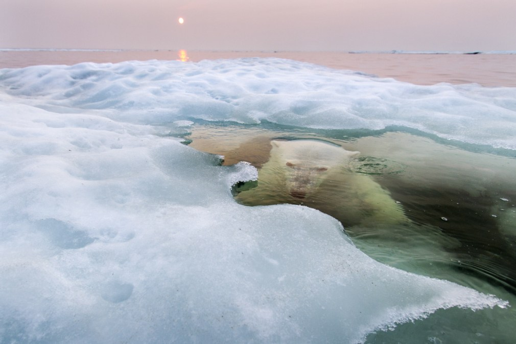 The Ice Bear - 2013-11-26_234548_nature.jpg