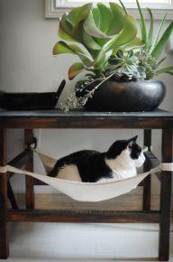 Mesa com rede para pets