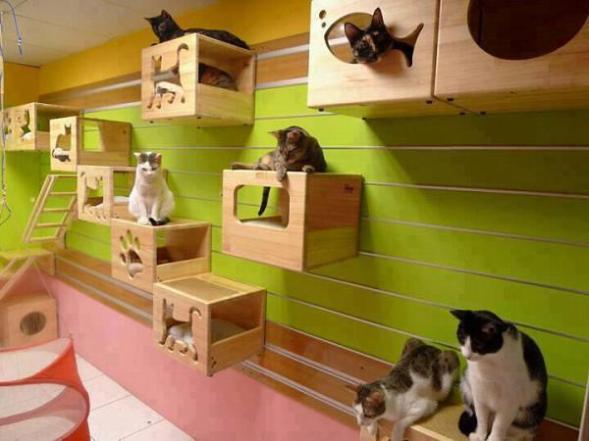 Mural divertido na parede para gatos