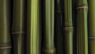 Бесплатная подборка Бамбуковых текстур для вашего дизайна