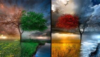Подборка восхитительных обоев для рабочего стола на тему Деревья
