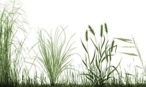 Просто Вдохновляющий Набор Кистей Травы для Фотошопа