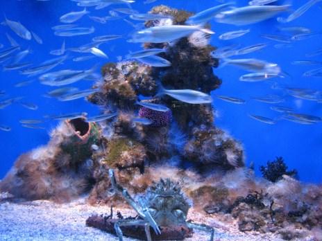 La Muzeul Oceanografic din Monte Carlo - De ce să eviţi atracţiile cu animale