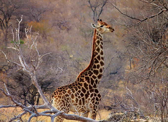 wildlife photography 10 Popular Types Of Photography   What Type of Photographer Are You?