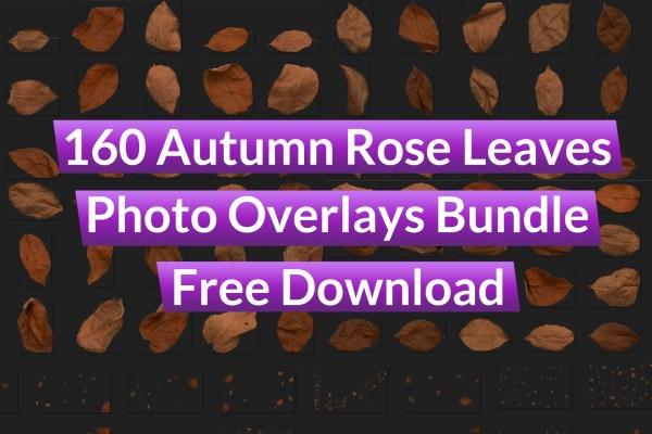 160 Autumn Rose Leaves Photo Overlays Bundle Free Download