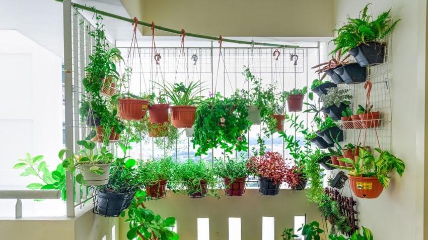 Membuat Taman Gantung Sederhana di Apartemen