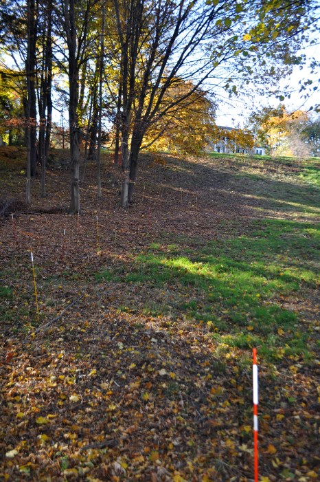 Fiber glass stakes show where specimen trees and shrubs will be planted