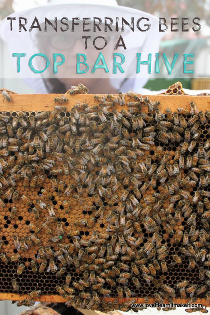 Transferring Bees To Our Top Bar Hive