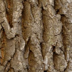 barkwoodplant