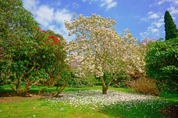 Tree-Center
