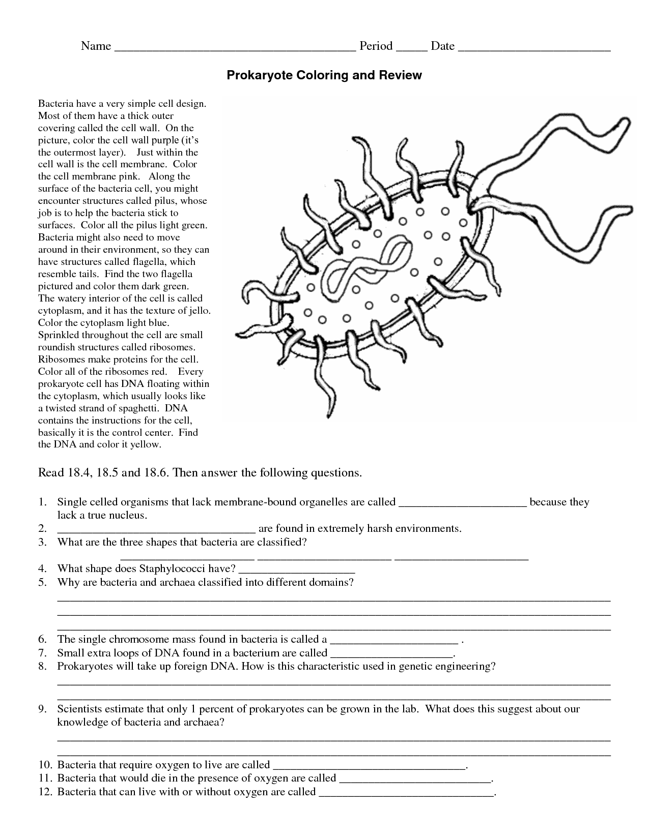 Bacteria Coloring Download Bacteria Coloring For Free