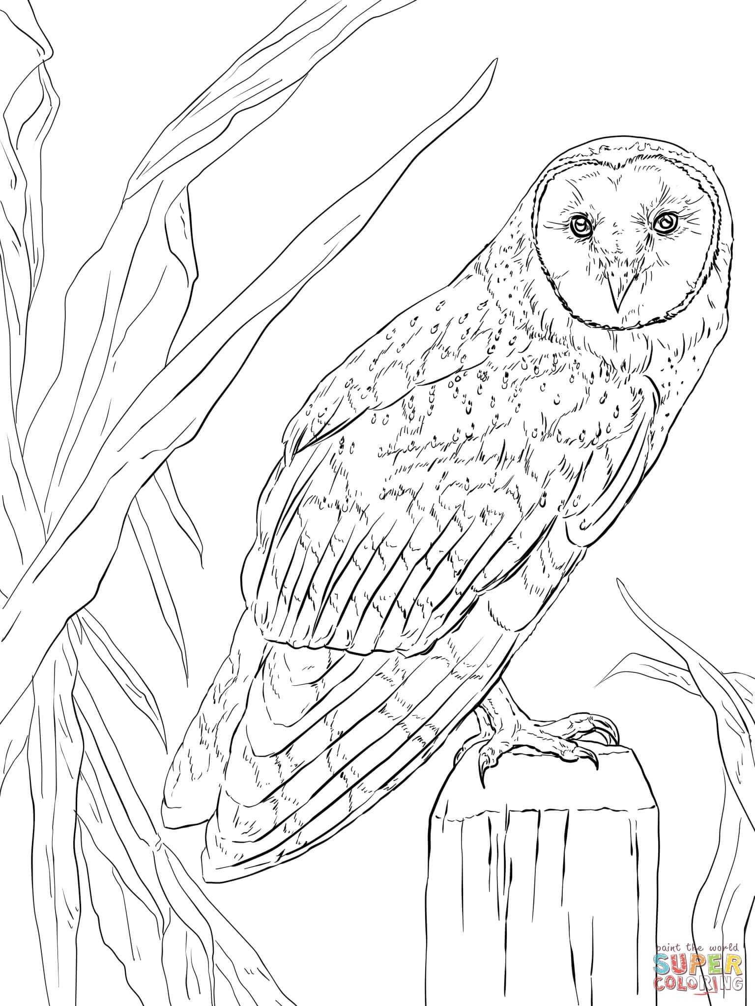 Long Eared Owl Coloring Download Long Eared Owl Coloring