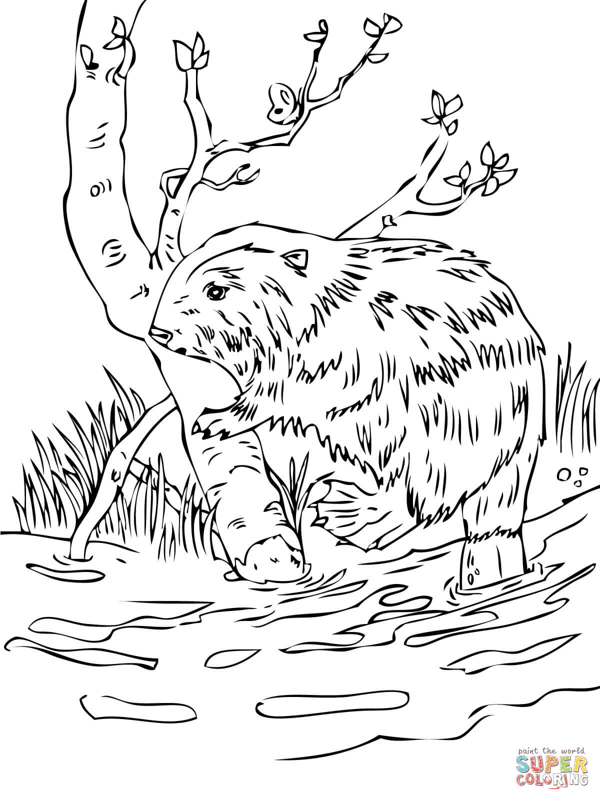 Beaver Coloring Download Beaver Coloring For Free