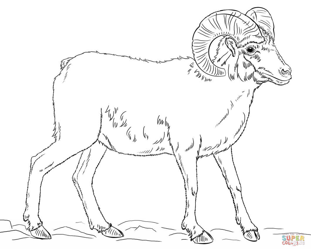 Download Bighorn Sheep Coloring For Free