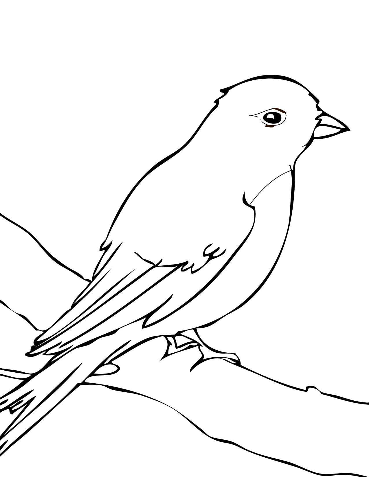 Songbird Coloring Download Songbird Coloring For Free