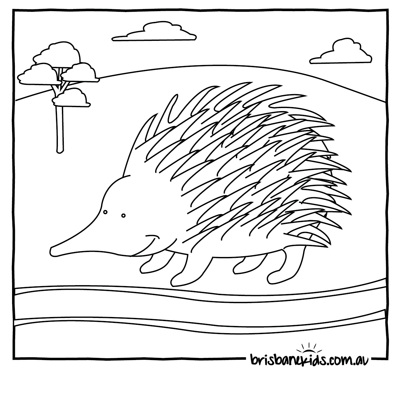 Echidna Coloring Download Echidna Coloring For Free