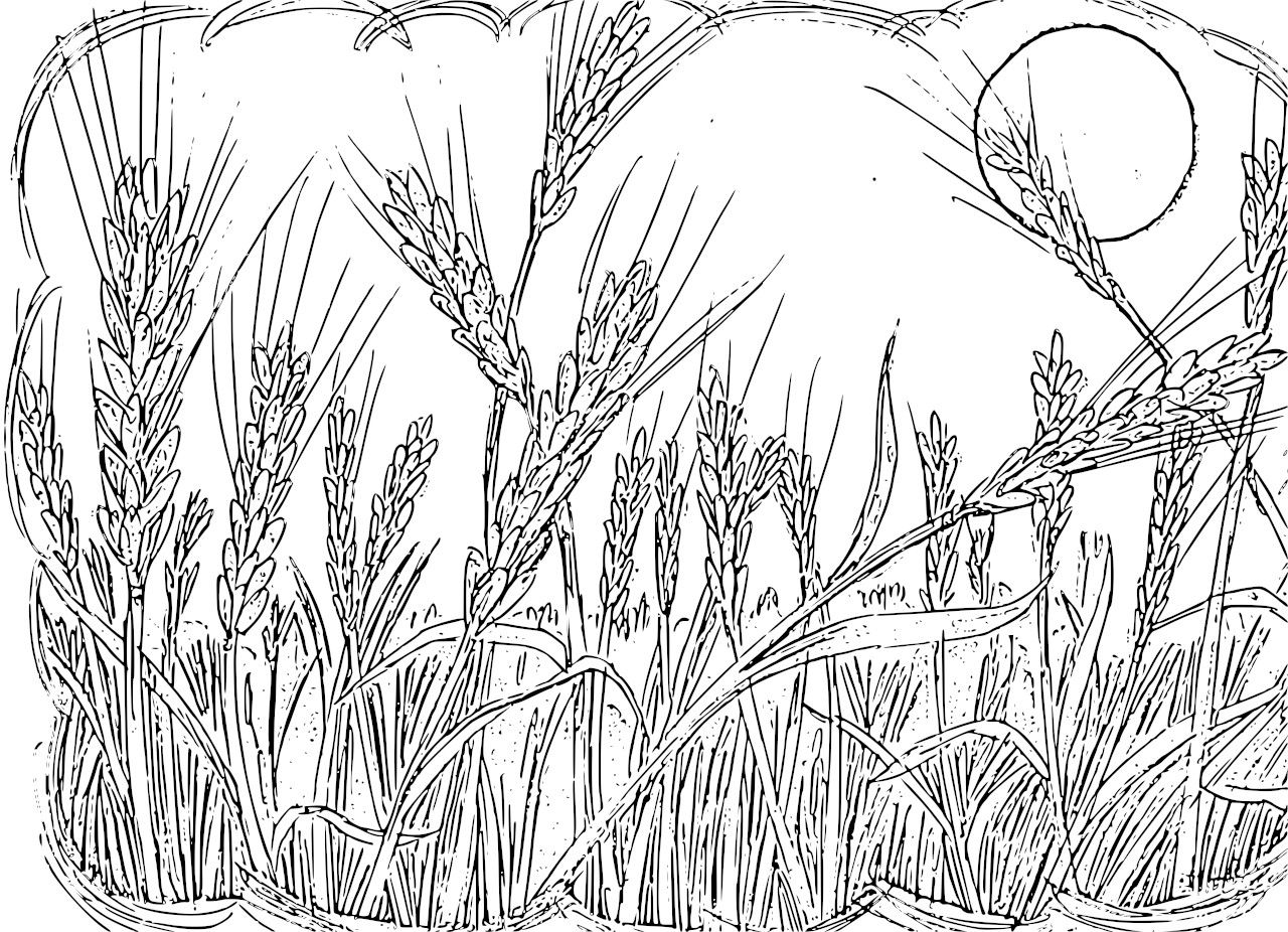 Paddy Field Coloring Download Paddy Field Coloring