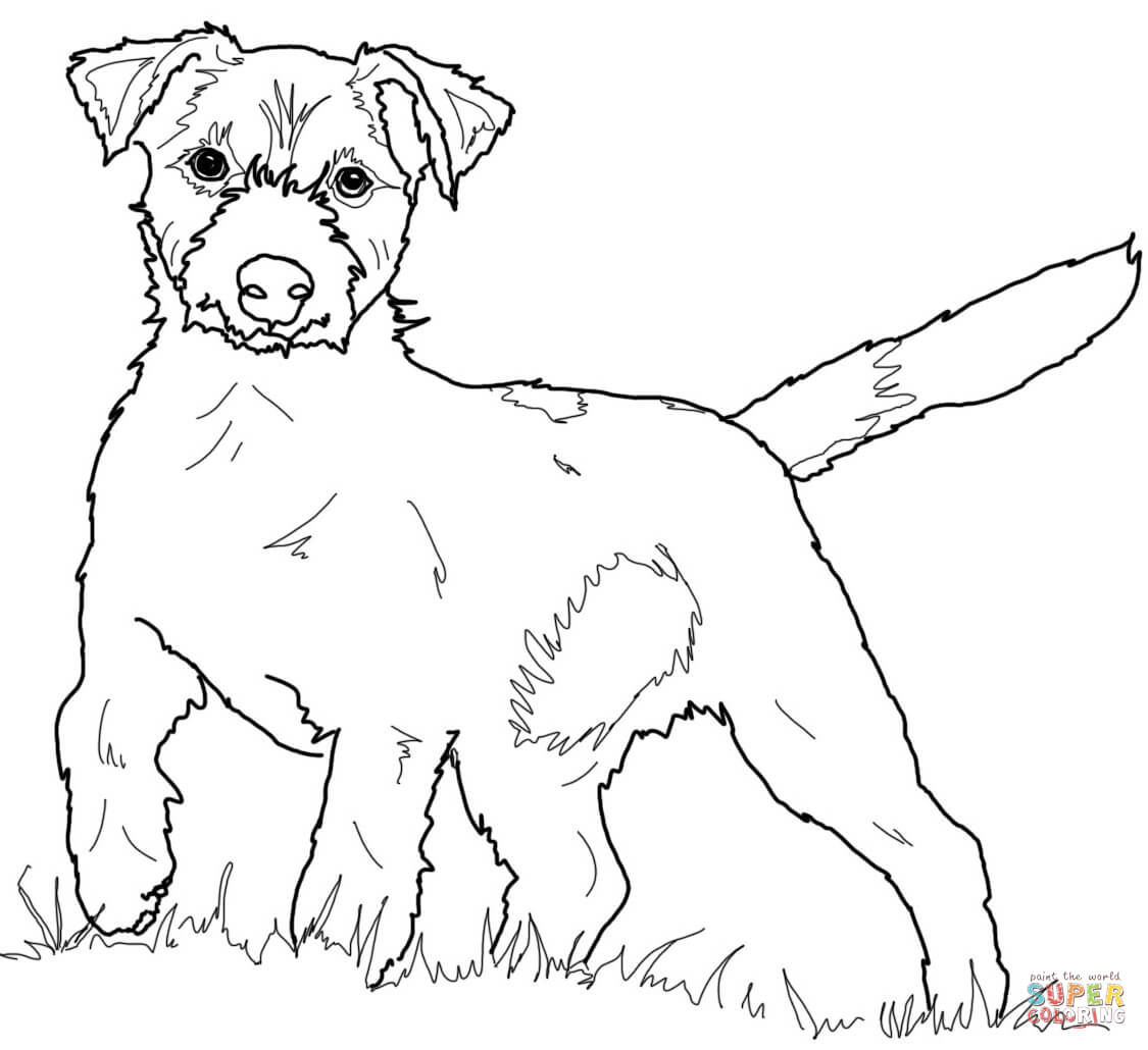 Jack Russell Terrier Coloring Download Jack Russell