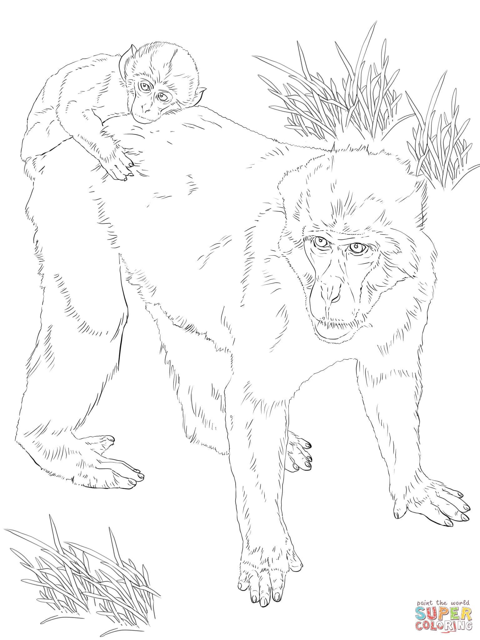 Macaque Coloring Download Macaque Coloring