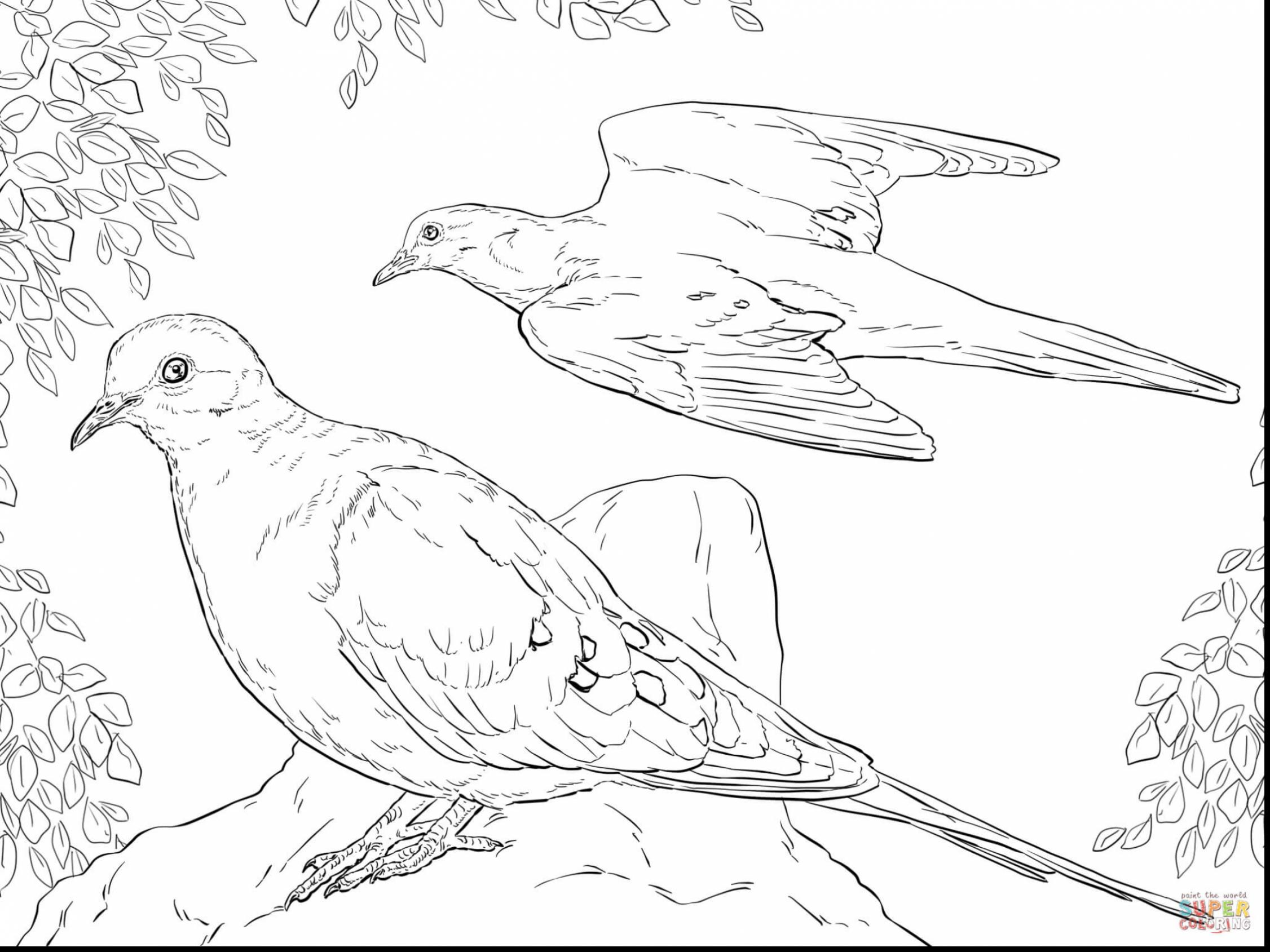 Mourning Dove Coloring Download Mourning Dove Coloring
