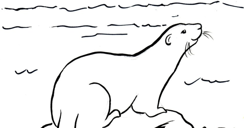 otter coloring download otter coloring for free