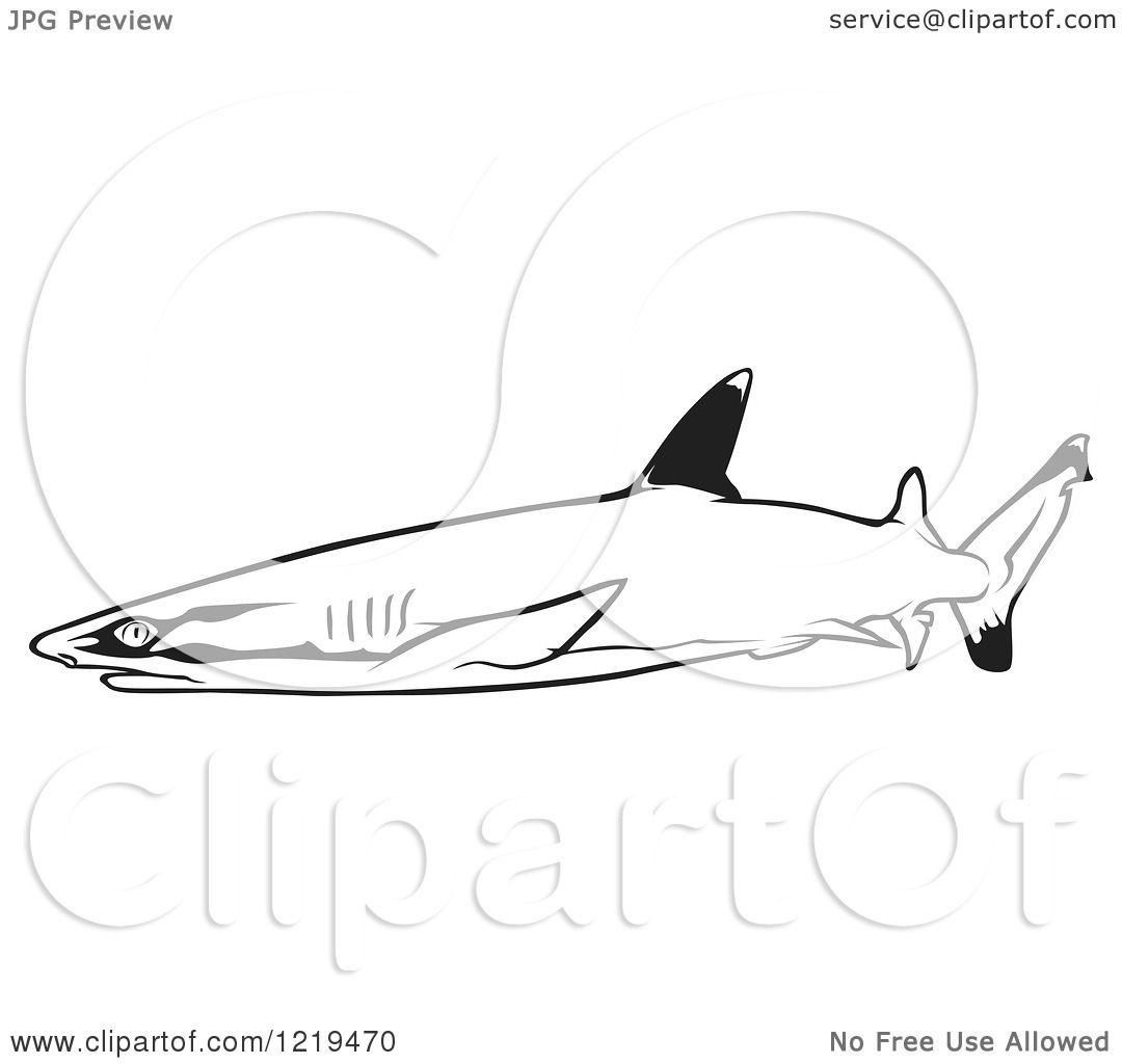White Tipped Reef Shark Coloring Download White Tipped