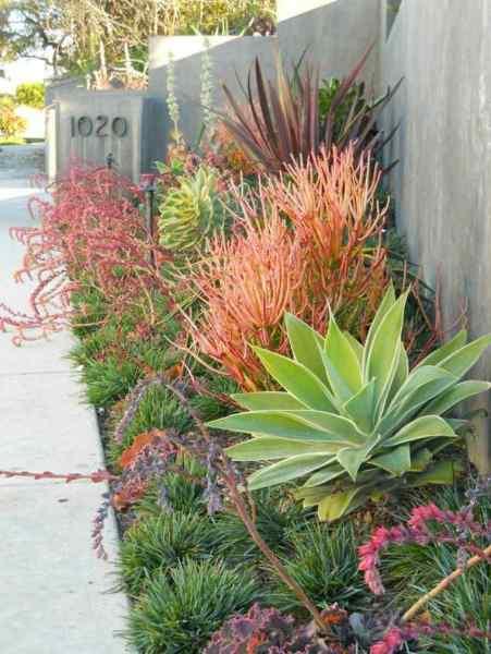 modern succulent garden ideas Décorer son jardinnaturellement