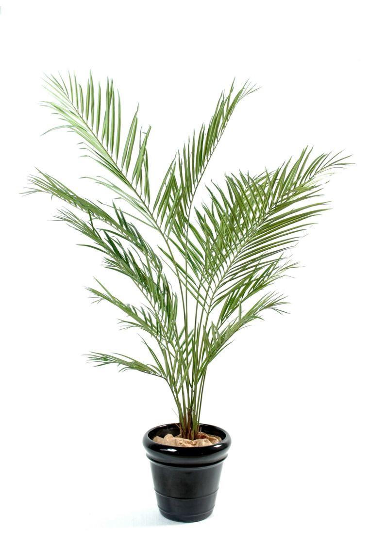 Plantes Vertes Dintrieur La Nature Dans Notre Quotidien