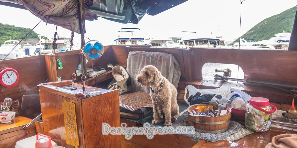 Coco the dog on a Sampan in Aberdeen, Hong Kong