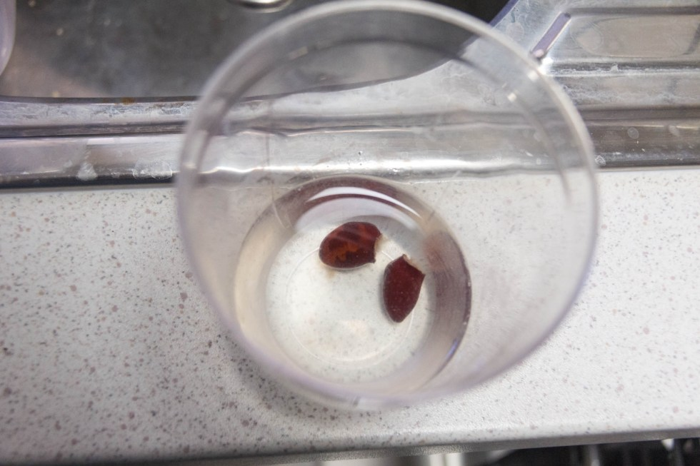12/01/15 Day 12: Lychee seed germination experimentation No change in the old seeds in water