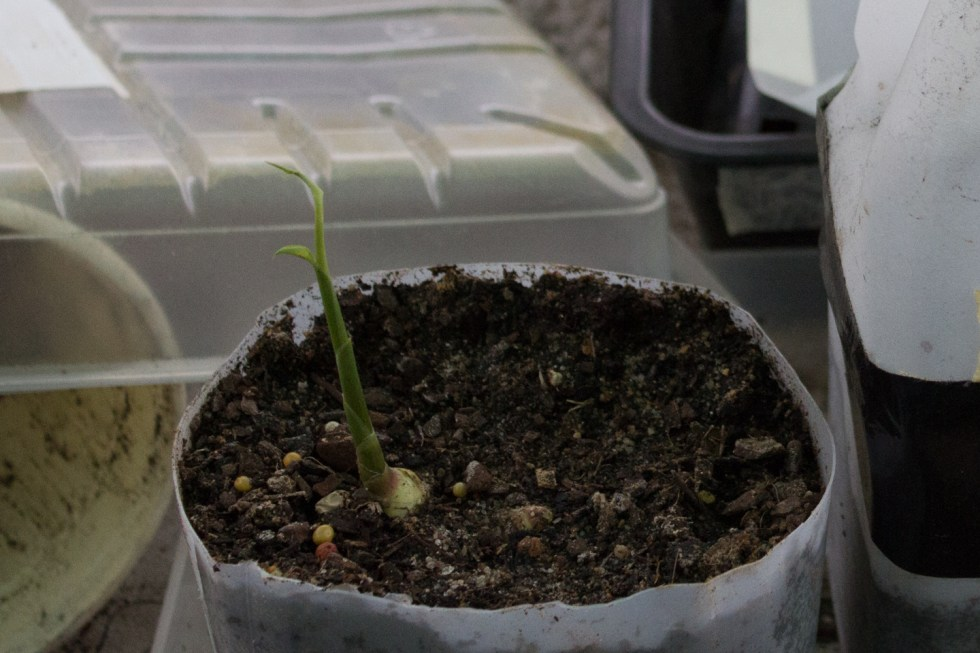 06/11/15 Day 41: Still growing strong