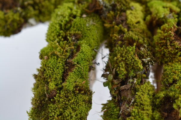 Moss covered hand