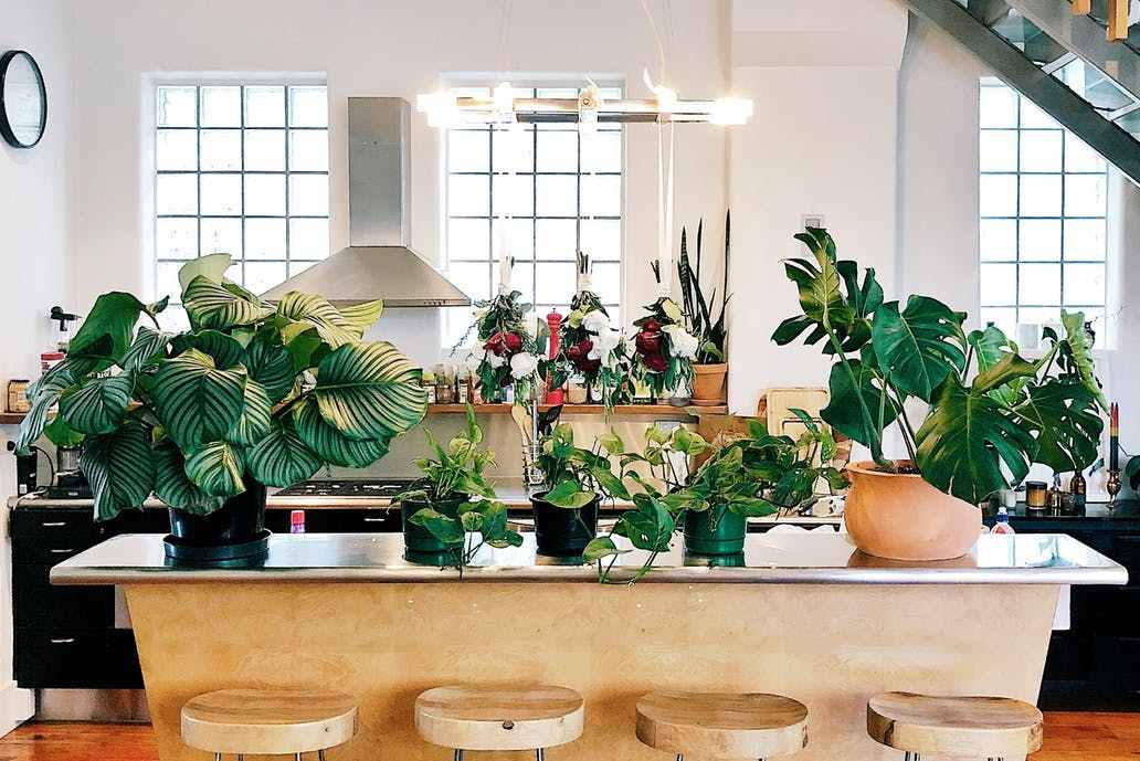 Plant Filled Homes- Design Peeper