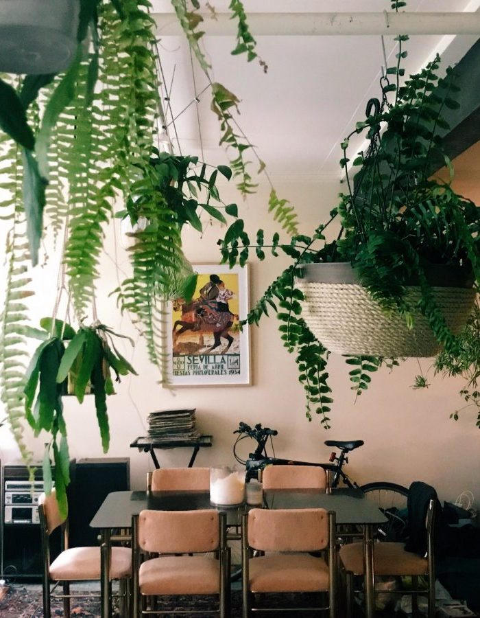 Plant Filled Interiors