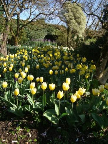 Spring blub display at Highgrove