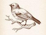 Sitting-Bird-DXF-File.jpg