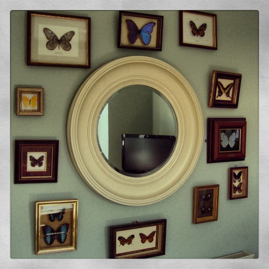 Entomology Convex Mirror Vintage Butterflies Framed Collection