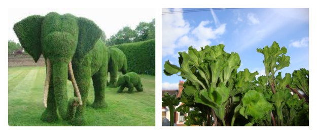 Elephant Topiary at Petersham Nurseries, Green Primrose windowbox